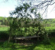 The willow shelter and bench in the Playing Field
